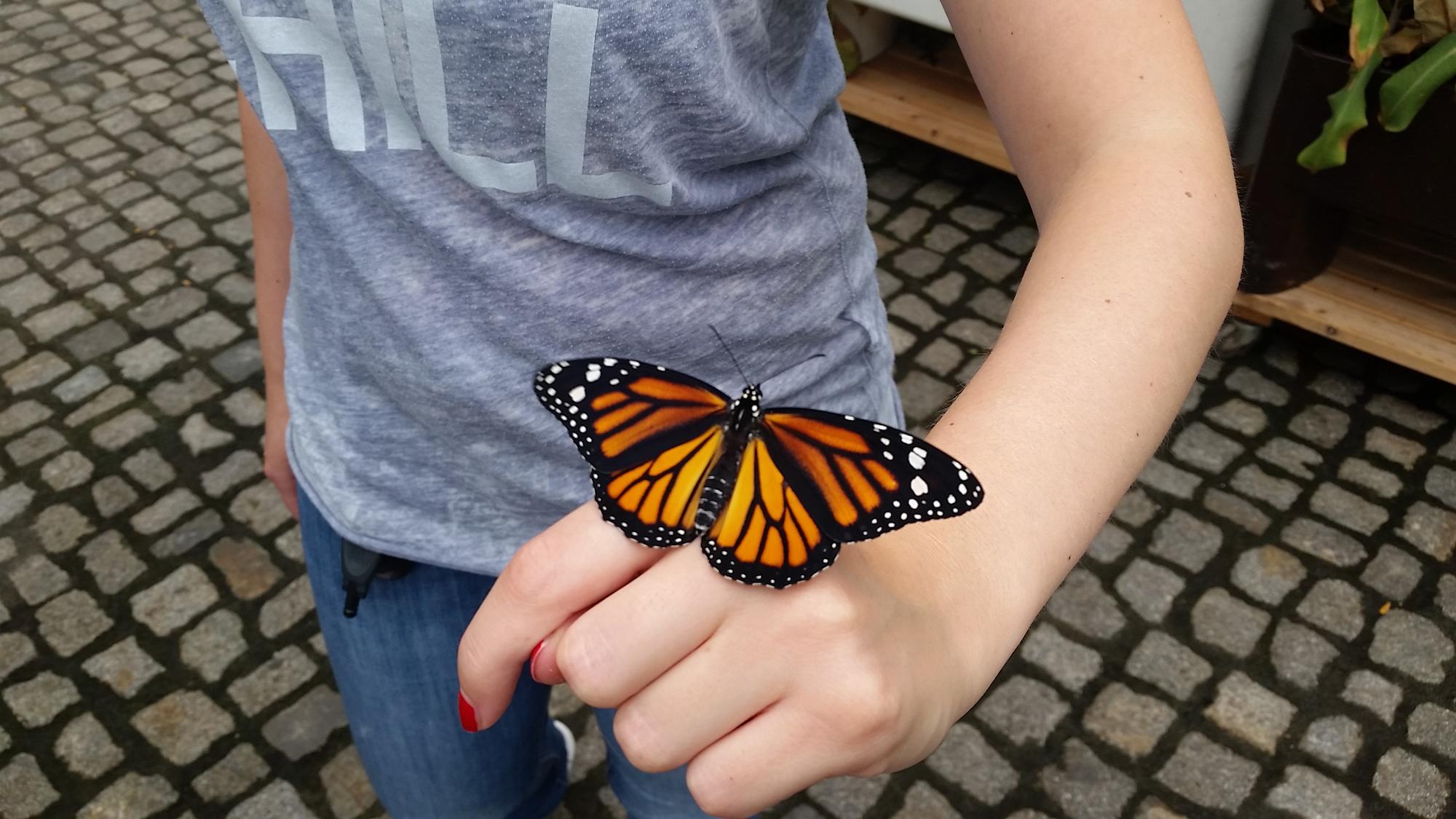 Schmetterling sitzt auf einer Hand