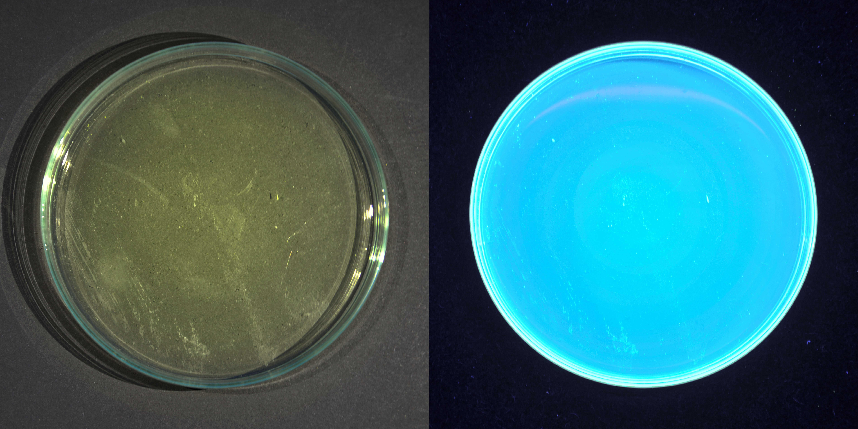 Fluoreszenz in der Natur
